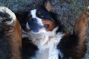 Photo #10: PET SITTER = ^. .^= I PET SIT 4 U!