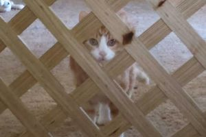 Photo #3: PET SITTER = ^. .^= I PET SIT 4 U!