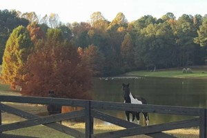 Photo #2: Horse Boarding-Stall & Pasture