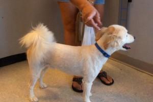 Photo #3: Hide'A'Way pet grooming
