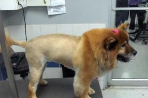 Photo #2: Hide'A'Way pet grooming