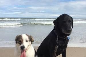 Photo #1: Loving Paws - dog walking/sitting services