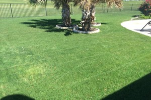 Photo #5: Mora's Lawn services