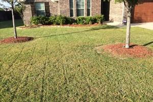 Photo #3: Mora's Lawn services