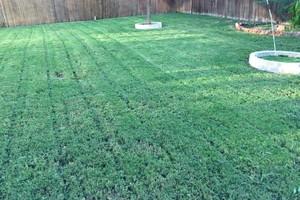 Photo #1: Mora's Lawn services