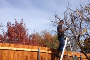 Photo #1: DFW Affordable Tree Service by Jackie