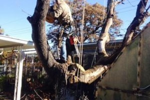 Photo #3: DFW Affordable Tree Service by Jackie