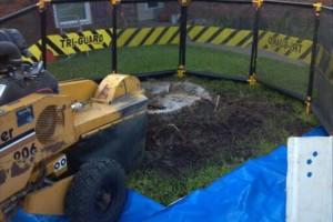 Photo #19: 811 Stump Grinding / Tree Service / Mistletoe removal