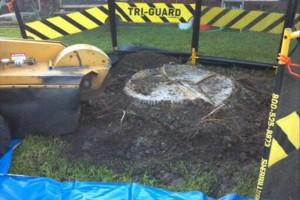 Photo #18: 811 Stump Grinding / Tree Service / Mistletoe removal