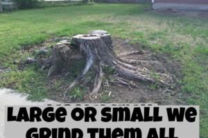 Photo #15: 811 Stump Grinding / Tree Service / Mistletoe removal