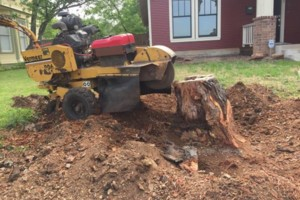 Photo #14: 811 Stump Grinding / Tree Service / Mistletoe removal