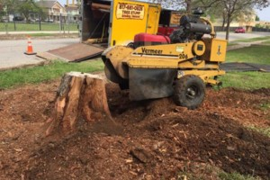 Photo #12: 811 Stump Grinding / Tree Service / Mistletoe removal