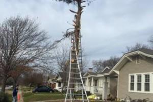 Photo #1: 811 Stump Grinding / Tree Service / Mistletoe removal