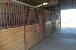 Photo #2: Full Care horse boarding