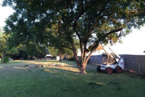 Photo #2: Farm & Ranch Tree & Brush removal. Haul off!