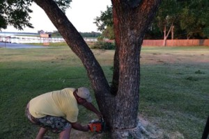 Photo #3: Farm & Ranch Tree & Brush removal. Haul off!