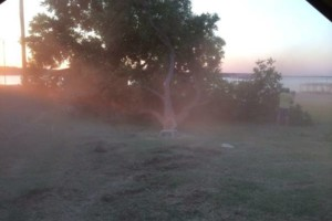 Photo #4: Farm & Ranch Tree & Brush removal. Haul off!