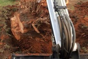 Photo #6: Farm & Ranch Tree & Brush removal. Haul off!