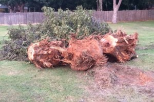 Photo #9: Farm & Ranch Tree & Brush removal. Haul off!