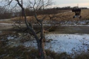 Photo #10: Farm & Ranch Tree & Brush removal. Haul off!