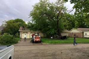 Photo #12: Farm & Ranch Tree & Brush removal. Haul off!