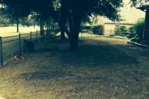 Photo #7: Bono complete lawn service