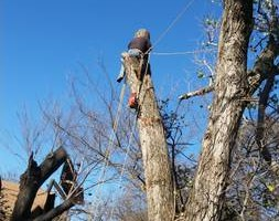 Photo #1: Incorporated, insured and Bonded Crest Tree Service