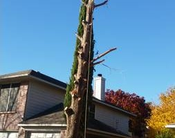 Photo #3: Incorporated, insured and Bonded Crest Tree Service