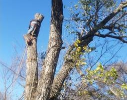 Photo #4: Incorporated, insured and Bonded Crest Tree Service