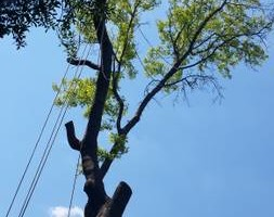 Photo #5: Incorporated, insured and Bonded Crest Tree Service