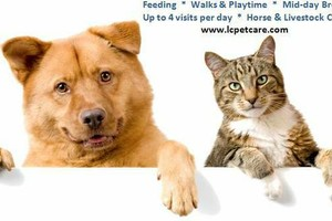 Photo #1: Pet Sitter - I come to your home
