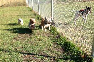 Photo #2: Dog/Cat nails, pet sitting, dog walking, potty visits