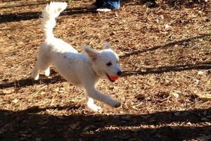 Photo #1: Dog/Cat nails, pet sitting, dog walking, potty visits
