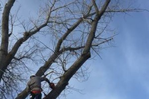 Photo #1: Rugged Cross Tree Service