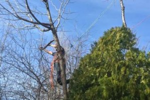 Photo #2: Rugged Cross Tree Service