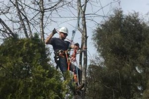 Photo #3: Rugged Cross Tree Service