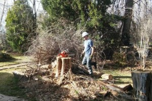Photo #4: Rugged Cross Tree Service