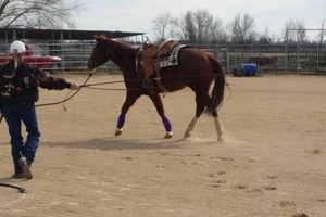 Photo #1: Do you love horses? Want to learn to ride?