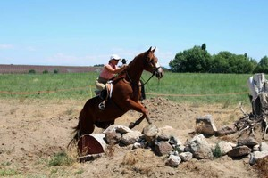 Photo #2: Do you love horses? Want to learn to ride?