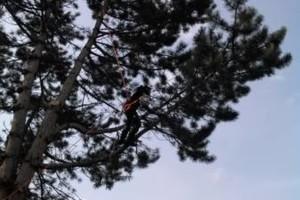 Photo #1: Minty's Tree Service, LLC