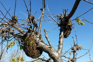 Photo #18: Bee Swarm removal, Bee Removals, Bee Help