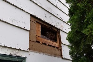 Photo #14: Bee Swarm removal, Bee Removals, Bee Help