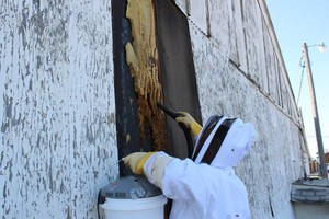 Photo #8: Bee Swarm removal, Bee Removals, Bee Help