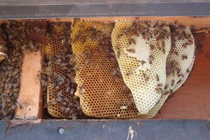 Photo #1: Bee Swarm removal, Bee Removals, Bee Help
