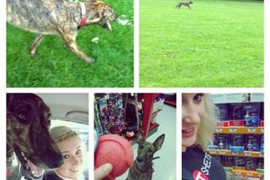 Photo #2: Petsitting & Training [Limited Time Specials, book now!]