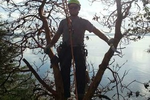 Photo #12: Professional Tree Service Boise