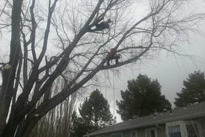 Photo #11: Professional Tree Service Boise