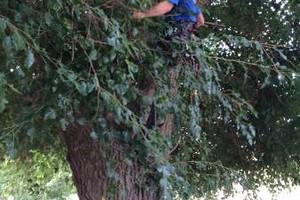 Photo #10: Professional Tree Service Boise