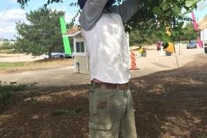 Photo #8: Professional Tree Service Boise