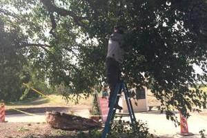 Photo #7: Professional Tree Service Boise